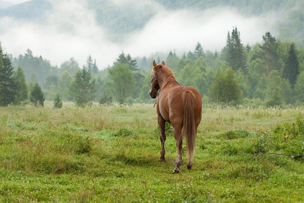 אוכל לסוסים גרינפילד
